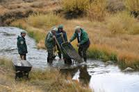 The Sagebrush Chapter of Trout Unlimited is effective in preserving and restoring prime fishing habitat due to a generous grant from the Richard Kroening family. The Northern Nevada-based chapter just issued the biggest round of funding to date from the Conservation Grant Program, a program that hasn't gotten much attention but is thought to be among the most lucrative of its kind for local Trout Unlimited chapters. Since 2009 the fund has grown from less than $540,000 to more than $850,000 while distributing more than $190,000 in grants. The grant program dates back to a 2006 grant from the family of Richard Kroening, a lifelong Trout Unlimited member. It wasn't until 2010 that the chapter issued the first round of grants. Since then, however, the program has grown from giving out less than $25,000 in the first year to nearly $45,000 in the current round awarded in January. The largest award this year was a $15,000 contribution to restoration project on the Little Truckee River. That's where a coalition led by the Truckee-Tahoe Trout Unlimited Chapter is working to improve fish habitat between Boca and Stampede reservoirs. Read More about the funding and projects.