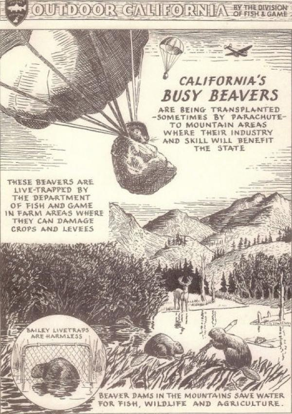 Beaver History in California