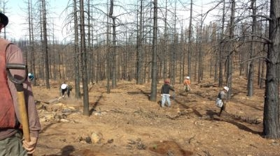 Plantation Re-Establishment Begins in King Fire Burned Area
